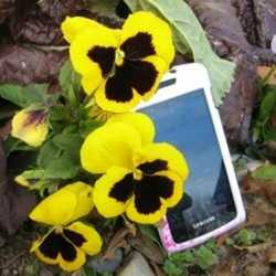 Technological Ways to Enjoy Gardening on Phone